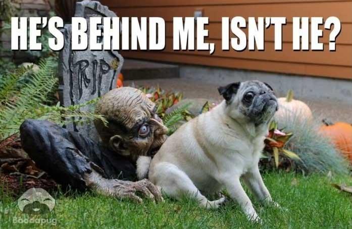 funny-halloween-memes12.jpg