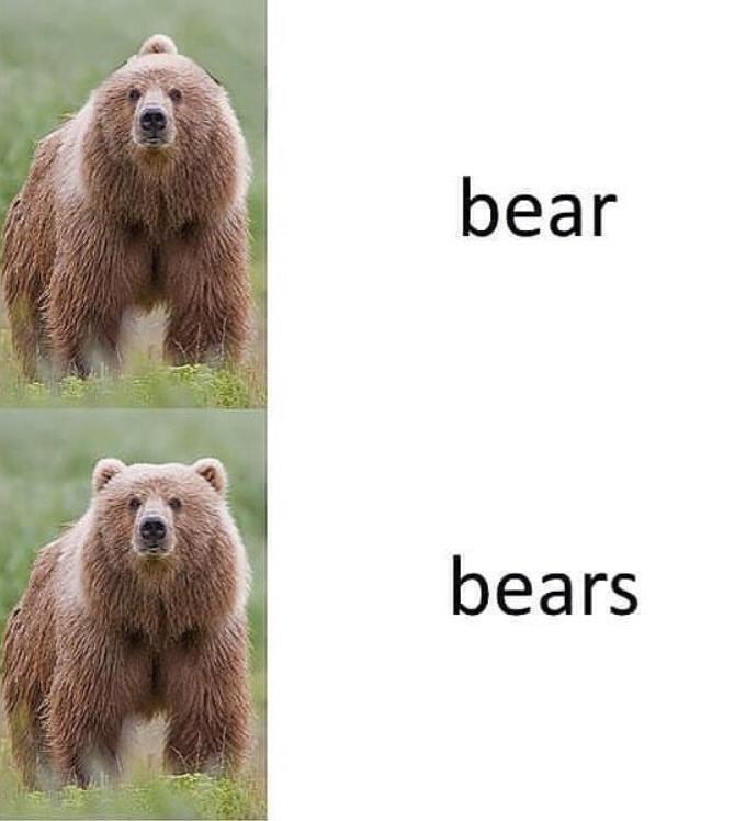 bears.jpeg.c32b4645fb1589a86d9fa80999a221a3.jpeg